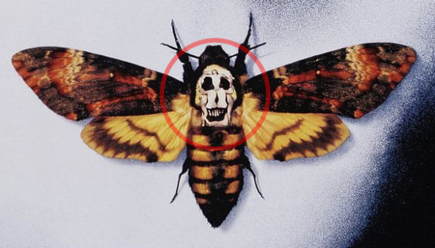 Look closely at the Silence of the Lambs movie poster. The skull in the moth head is actually naked ladies.